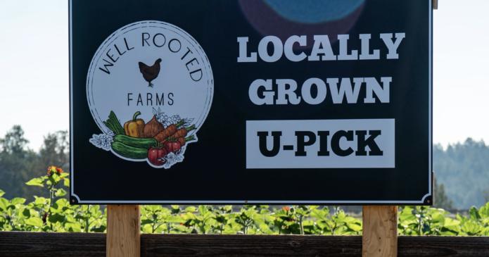 U Pick Farms